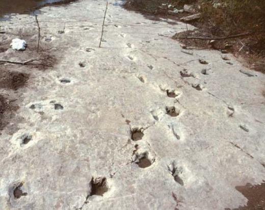 Cách đây khá lâu, một nhóm khảo cổ đã khai quật được một tảng đá lớn, trên đó là những bước chân của con người và khủng long cùng song hành. Đây là bí ẩn khiến các nhà khoa học hết sức đau đầu bởi thời kì xuất hiện khủng long chưa có sự hiện diện của con người. Hiện một số đã được chứng minh là giả nhưng không phải tất cả đều vậy.