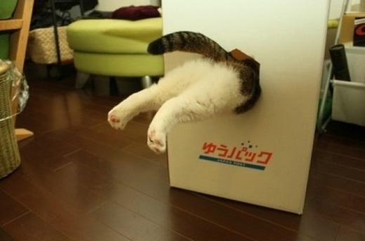 Đừng hỏi tôi con mèo này đang làm gì, tôi không có quen nó đâu nha!