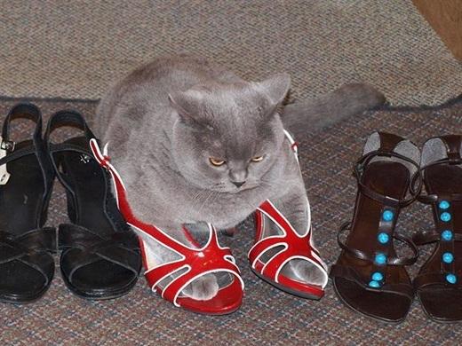 Chế nói là chế thích giày màu xanh dạ quang cơ mà!