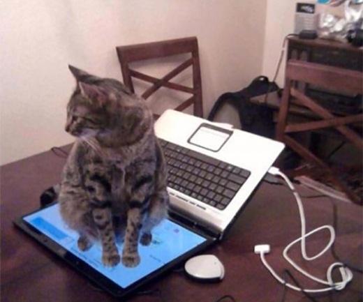 Giờ thì tôi đã hiểu ánh mắt gian xảo của nó khi tôi cấm không cho nó trèo lên bàn phím.