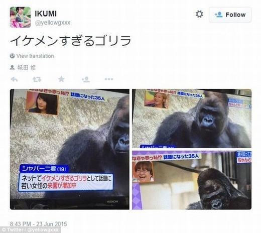 Chị em phụ nữ Nhật đang phát cuồng chú khỉ đột.