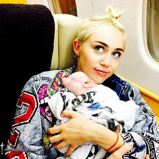 Miley Cyrus trở thành người ăn chay quyến rũ nhất thế giới