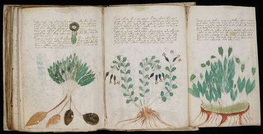 Đây được gọi là bản thảo Voynich, là một văn kiện viết tay được mã hóa bằng một hệ thống ngôn ngữ và kí tự hết sức kì bí, chưa từng được ghi nhận trong lịch sử loài người. Các nhà khoa học đã tính tuổi của chúng và xác định rằng bản thảo Voynich xuất hiện vào khoảng thế kỷ 15. Hiện bản thảo gây nên tranh cãi lớn: Một bên cho rằng đây là ngôn ngữ Mexico đã bị lãng quên, một bên lại cho rằng nó là kí tự mã hóa của người châu Á.