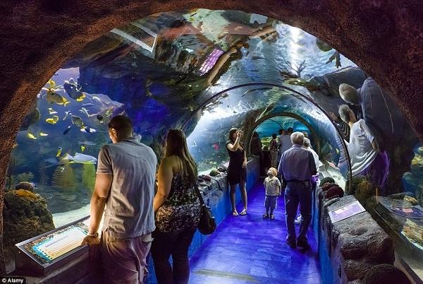 """Tương tự như đường hầm cá mập ởDubai, Mall of Americacũng có một khu hải dương học tên""""Sea Life Aquarium""""với đầy cá đuối gai độc, rùa biển và nhiều loại cá biển khác."""
