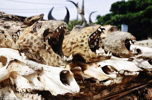 Hình những đầu lâu động vật đã khô trông rất ghê rợn.