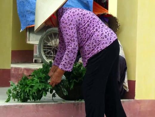 Những bó rau ngót tươi xanh của cụ được nhiều người ghé mua