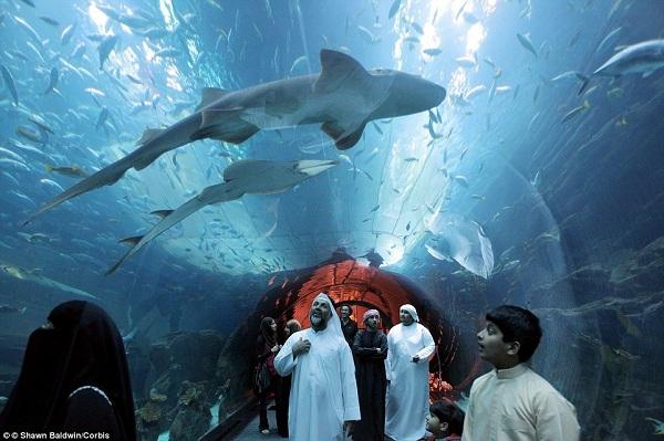 Ở khu vực củaDubai Malllà một đường hầm cá mập siêu ấn tượng.