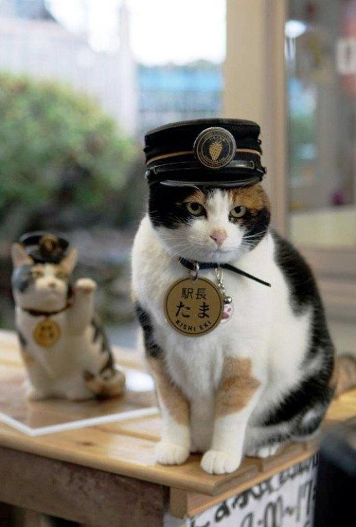 Hàng nghìn người thương tiếc dự tang lễ cô mèo trưởng ga nổi tiếng