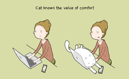 Các chú mèo rất biết cách tận hưởng cuộc sống lười nhác
