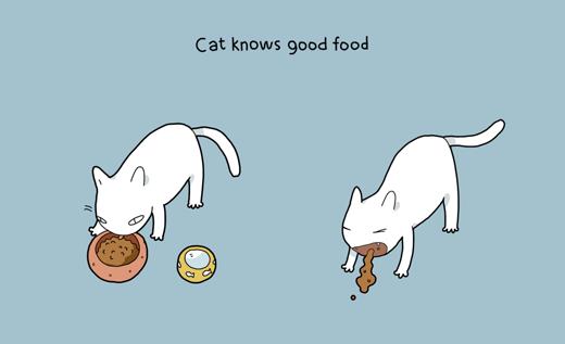 Mèo cũng rất kén ăn như một cô tiểu thư đỏng đảnh. Có lẽ nên gọi là 'chảnh mèo' thay vì 'chảnh chó' chứ nhỉ?