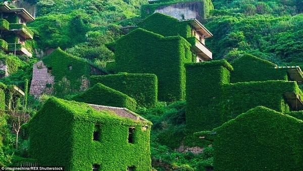 Những ngôi nhà xanh có ở khắp nơi do rêu, dây leo và lá cây. Làng chài trù phú giờ đã là của quá khứ.