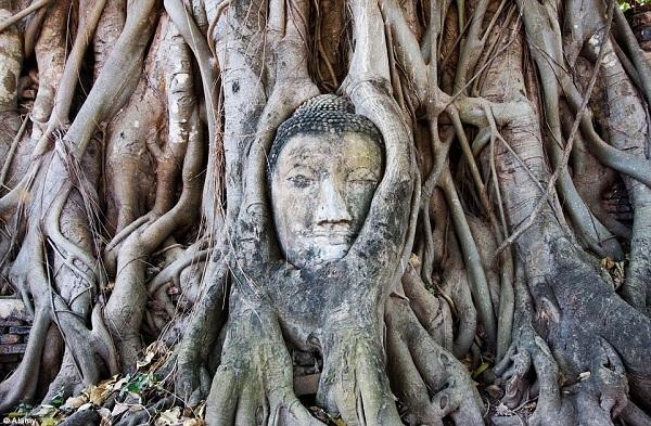 Ngôi đền tại thành phố lịch sửAyutthayalà một di sản thế giới được UNESCO công nhận vào ngày 13/12/1991. Điểm thu hút nhất của ngôi chùaWat Maha Thatthuộc quần thể di tích này là tượng đầu Đức Phật nằm trong thân cây.