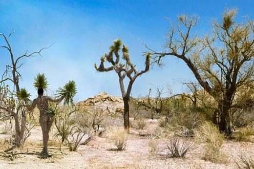 Filippo Loco đã sử dụng sơ, hồ dán và keo để đính những là cây lên người của người mẫu ở Công viên quốc gia Josua, California, Mỹ.