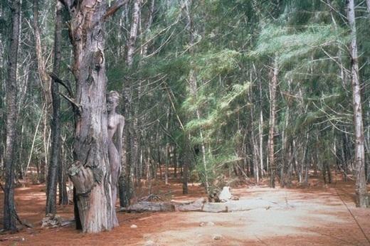 Người mẫu ngụy trang hoàn hảo thành một thân cây khô trong khu rừng Piones ở Puerto Rico.