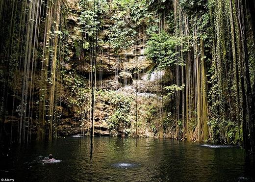 """Nằm trên bán đảo Yucatan, Mexico, hồ Cenote Ik Kil mang lại những trải nghiệm khó quên cho du khách. Hồ nước ngọt này là sản phẩm của quá trình kiến tạo địa chất kéo dài tới hàng triệu năm, và được cho là một nơi linh thiêng đối với người Maya cổ đại, vì thế khung cảnh mang nét cổ kính với màu xanh của rêu phong bám phủ. Hố Ik Kil mở thông như giếng trời, khoảng cách giữa mặt đất và mặt nước bên dưới là 26 mét, trông hồ nước thiêng này giống như một """"bồn tắm"""" lộ thiên."""