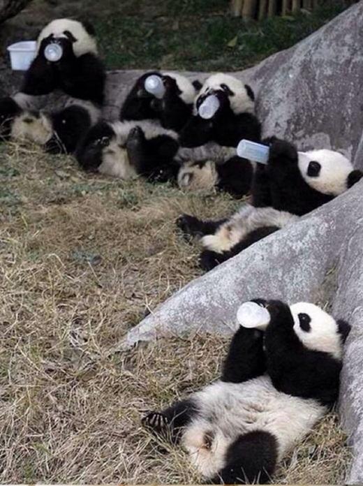 Mệt rồi thì hãy cụng bình sữa và ngồi uống cạnh nhau cho ấm áp nhé!