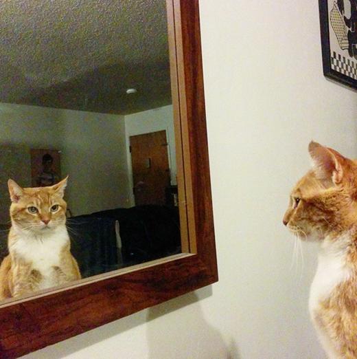 Đầu tiên, hãy nhìn cơ thể mình trong gương và tự nhủ: Chế biết chế có thể trở nên xinh đẹp nhất thế giới mà!