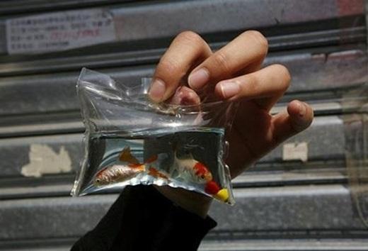 Kỳ dị với móc khóa bong bóng chứa cá, rùa bên trong