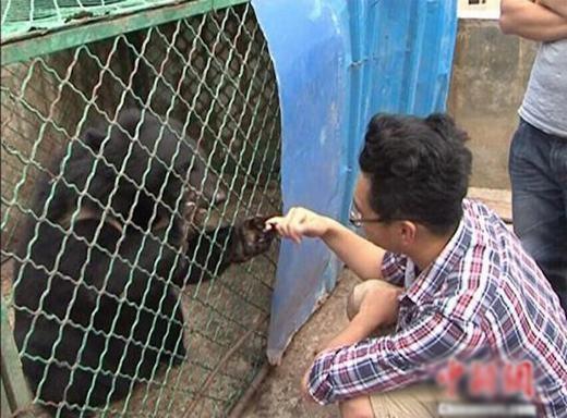 Tưởng là chó, người đàn ông nuôi gấu hơn 2 năm