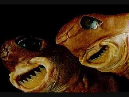 Loài cá mập này có tên gọi khá dễ thương là Cookiecutter. Tuy nhiên chúng rất hung dữ, có miệng rộng để hút con mồi và những chiếc răng sắc để kết liễu con mồi.