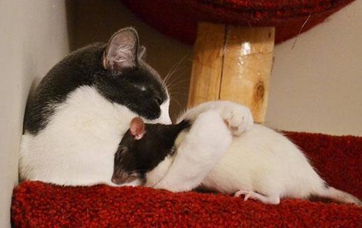 """""""Hai đứa ôm nhau ngủ thế này có yên bình không cơ chứ"""""""