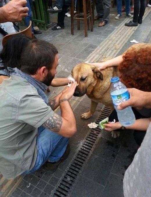 Những người qua đường dừng lại để giúp rửa mắt cho một chú chó bị cay bởi khí gas trong một cuộc biểu tình.