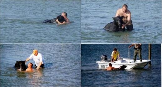 Nhà sinh vật họcAdam Warwickđã nhảy xuống nước để cứu một chú gấu nặng 180kg khỏi bị chết đuối.