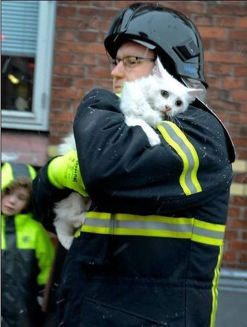 Ánh mắt vẫn còn hoảng hốt của chú mèo nhỏ sau khi được người lính cứu hỏa đưa ra khỏi đống tuyết lạnh giá.