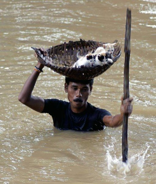 Người đàn ông đội trên đầu chiếc làn để đưa những chú mèo khỏi dòng nước lũ ở thành phố Cuttack, Ấn Độ.