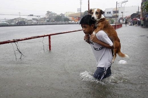 Cậu bé đang cõng một chú chó trên lưng trong dòng nước lũ ở Manila, Philippines.
