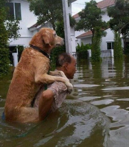 Người đàn ông cõng chú chó khỏi dòng nước lũ.