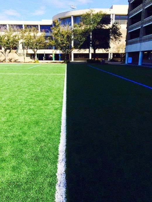 Vạch sân cỏ vô tình trở thành ranh giới phân chia khu vực bóng mát và nắng nóng