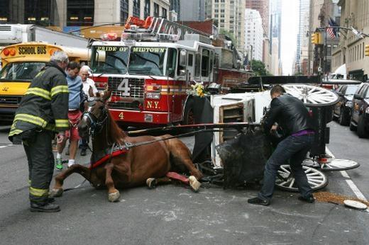 """Dù ở thời kì hiện đại nhưng xe ngựa hiện nay vẫn được một số ít người sử dụng. Chính phương tiện """"cổ lỗ sĩ này đã khiến 120 người chết hàng năm."""