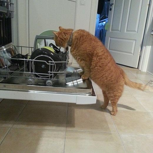 Chuyên gia rửa chén bằng cách... liếm.
