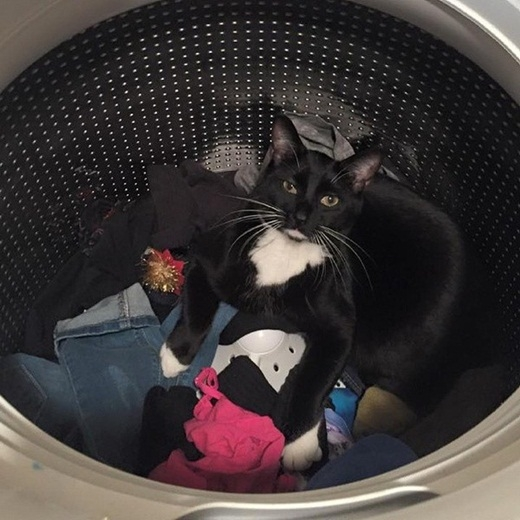 Việc giặt giũ đã có mèo bảo kê.