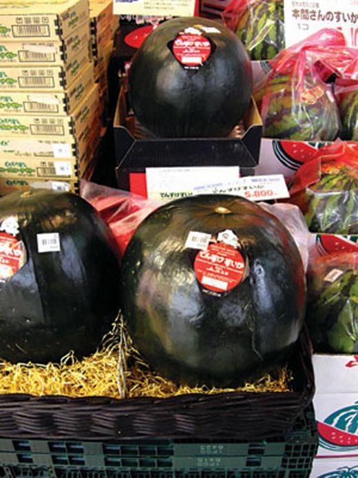 Quả dưa hấu đen này từng xuất hiện trong một phiên đấu giá ở chợ Asahikawa, trên đảo Hokkaido, phía Bắc Nhật Bản. Nó được bán với giá 300.000 Yen, tức khoảng 66,6 triệu đồng. Được biết, dưa hấu đen chỉ được trồng duy nhất ở một vùng đất là ở thị trấn Toma trên đảo Hokkaido, và lí do loại quả nàyđắt đỏchính là ngoại hình đen tuyền, ruột chắc ngọt và mát.