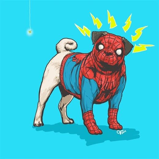 Một lần nữa, giống chó Pug được chọn vào vai siêu anh hùng Người nhện (Spider man)