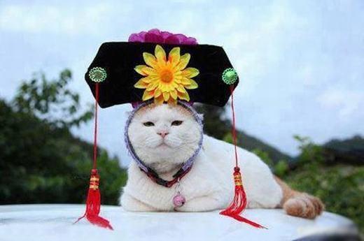 Xin chào, tớ là mèo cách cách