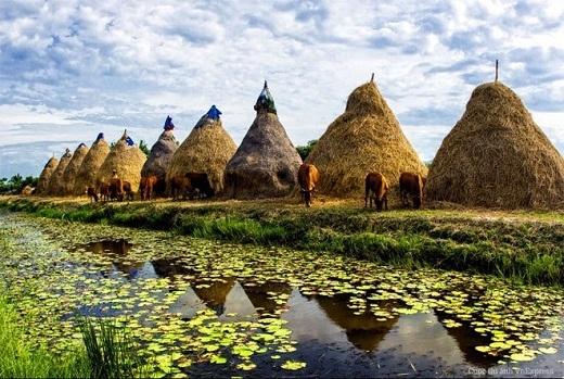 Làng quê Việt Nam thanh bình, yên ả với dòng sông, những ụ rơm to và đàn bò.