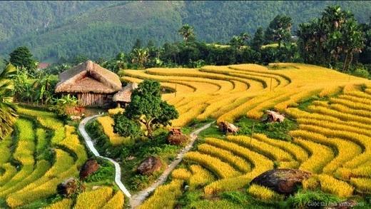Thôn Khuổi Mỵ, Hà Giang khoác lên mình chiếc áo vàng óng của mùa thu hoạch.