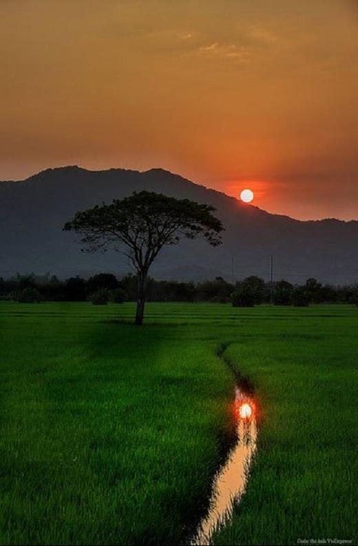 Những cánh đồng lúa xanh rì luôn mang lại cảm giác yên bình khó tả.