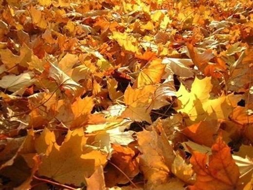Con đường mùa thu đẹp như mơ...