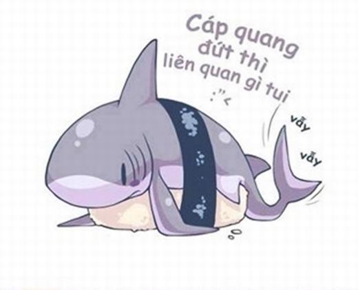 Ảnh chế cá mập phủ nhận cắn cáp quang.