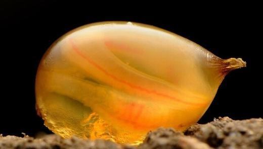 Cực sốc với tinh trùng cổ xưa nhất thế giới
