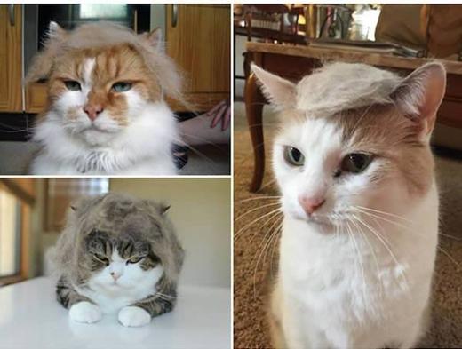 """Hội những người yêu kiểu tóc """"bông gòn""""."""