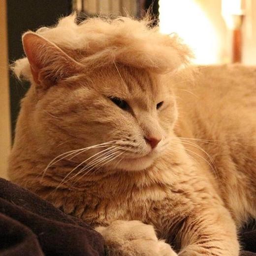 Chú mèo quý tộc đây mà!
