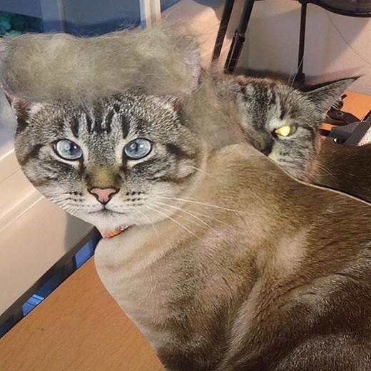 """""""Nhìn gì mà nhìn? Chưa thấy mèo sang chảnh bao giờ à?""""."""