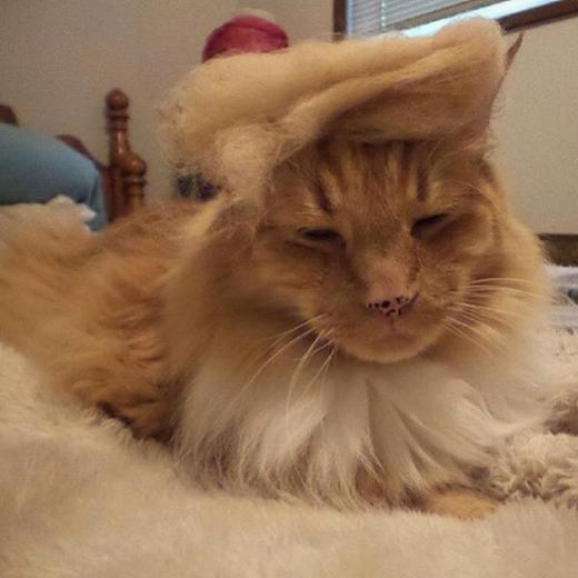 Nhìn giống sư tử không?.