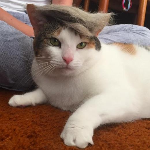 """""""Mèo đẹp thì tóc gì chẳng đẹp""""."""