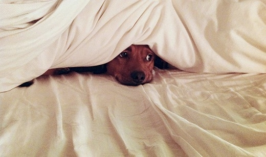 Nhỡ tè dầm rồi, em không dám bước ra khỏi giường đâu!.